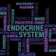 sistema endocrino vector cristinatur